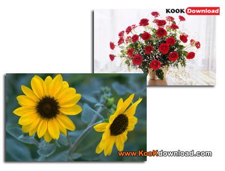عکس گلهای زیبا Beautiful Flowers